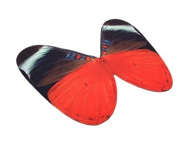 Butterfly Wings Queen Flasher
